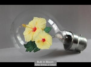 2ND_Bulb In Bloom_Jo Gilbert