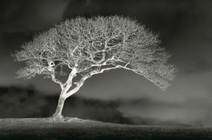 2ND_PRINT_The Ghostly Tree_Simon Caplan
